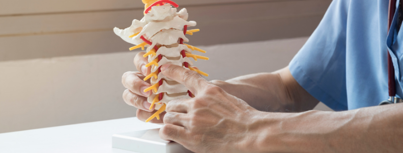 Chiropractor- Chiropractic care-doctor pointing at vertebrae model